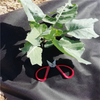 Ecofriendly anti-uv weed control 100%polypropylene spunbond nonwoven fabric