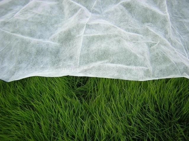 Agriculture nonwoven fabric 100% Pp Spunbonded Nonwoven Fabric for Garden Furniture /crop/fruit