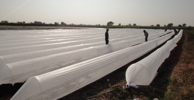 17gsm pp spunbond nonwoven fabric agriculture product